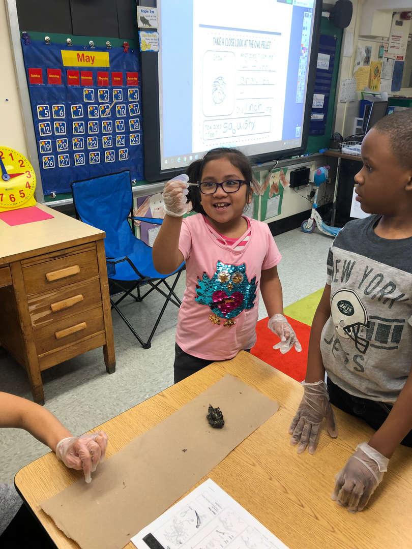 Mrs. Gabrielson's class Owl Unit-dissecting owl pellets.