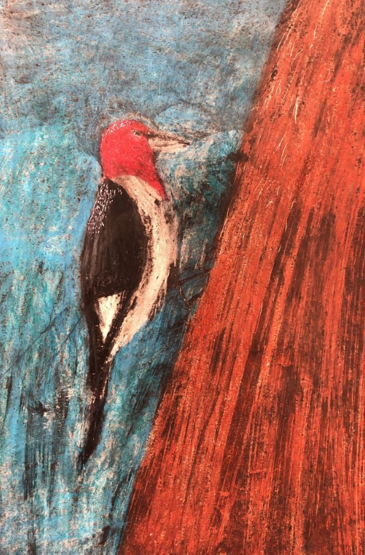 Rainah Bennett Red Headed Woodpecker Gr 5