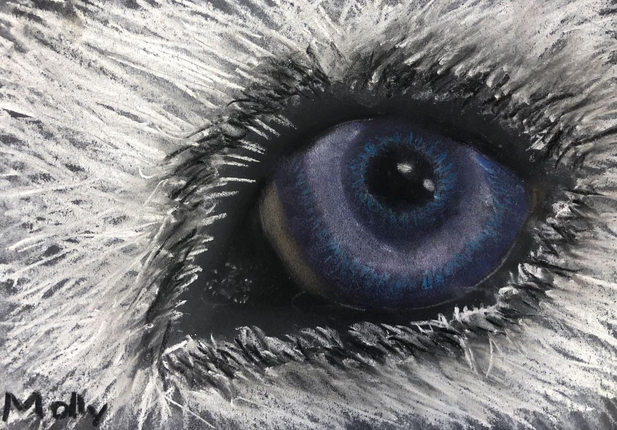 Molly Dormurat Gr 6 Eye