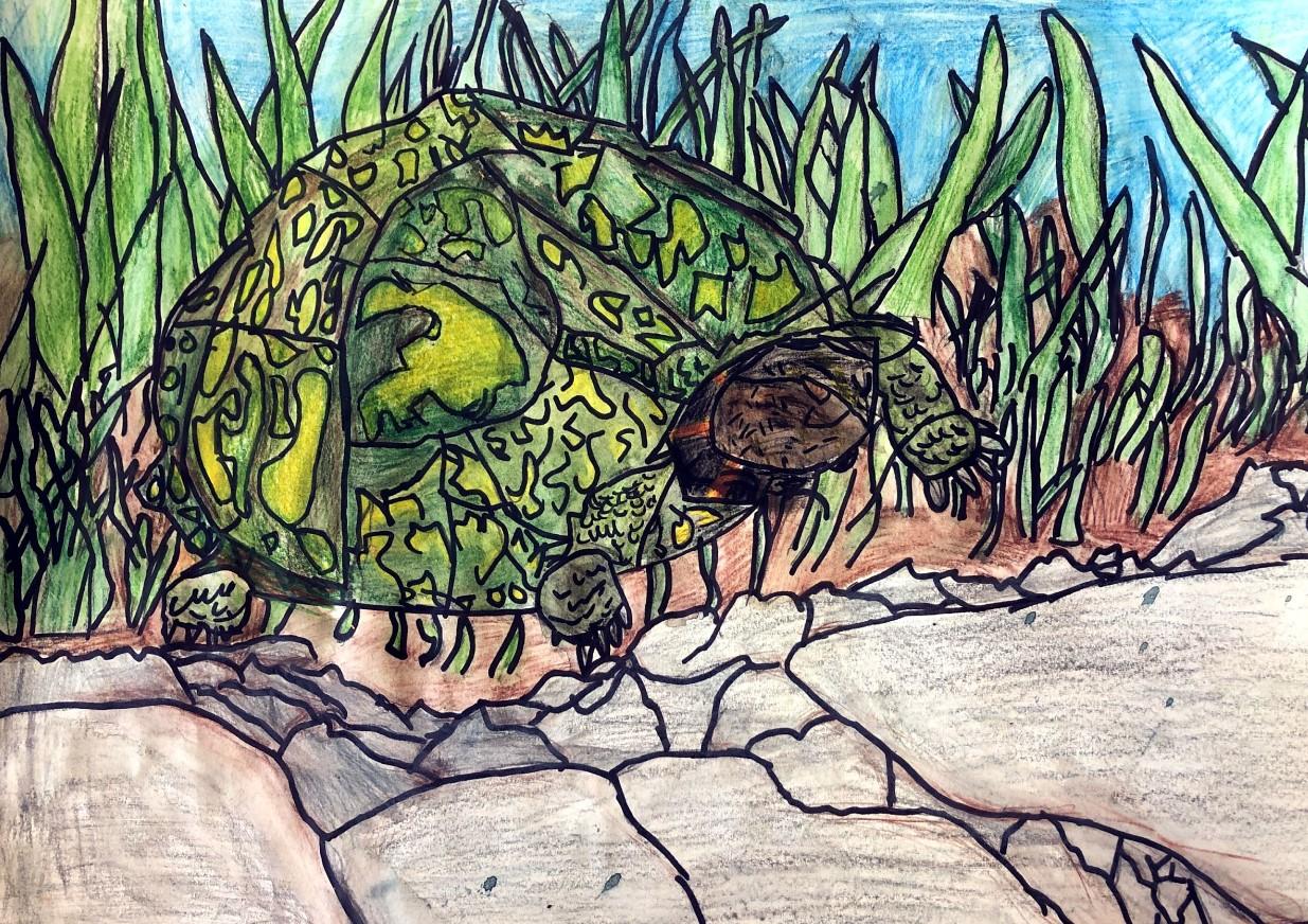James Kallen Eastern box turtle Gr 5