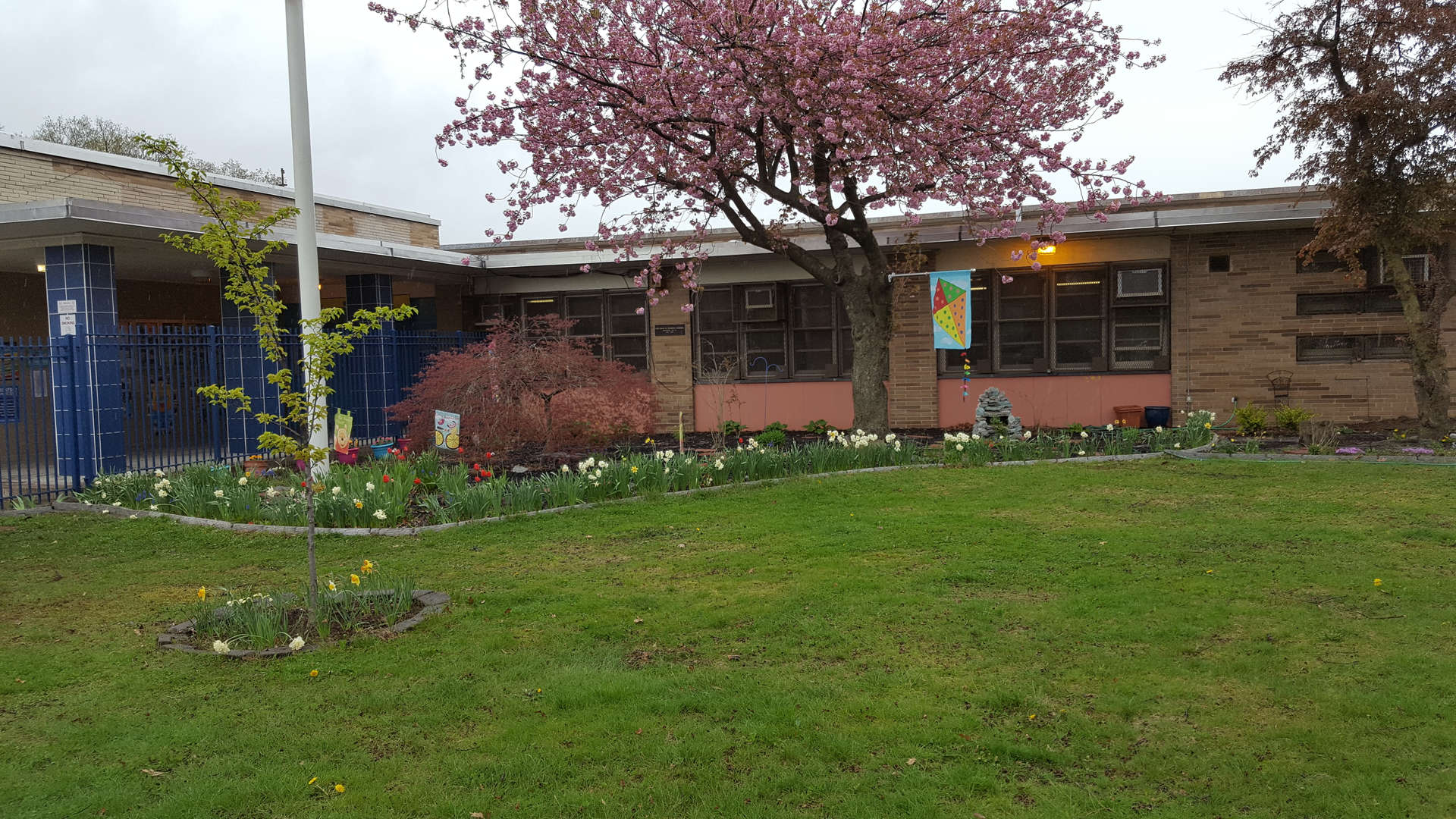 front garden at PS 38 school in spring. The tulips are starting to gow.