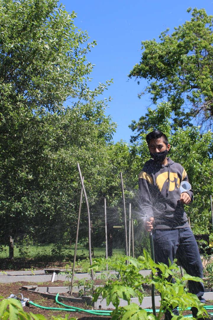 Student spraying garden hose to water plants in garden