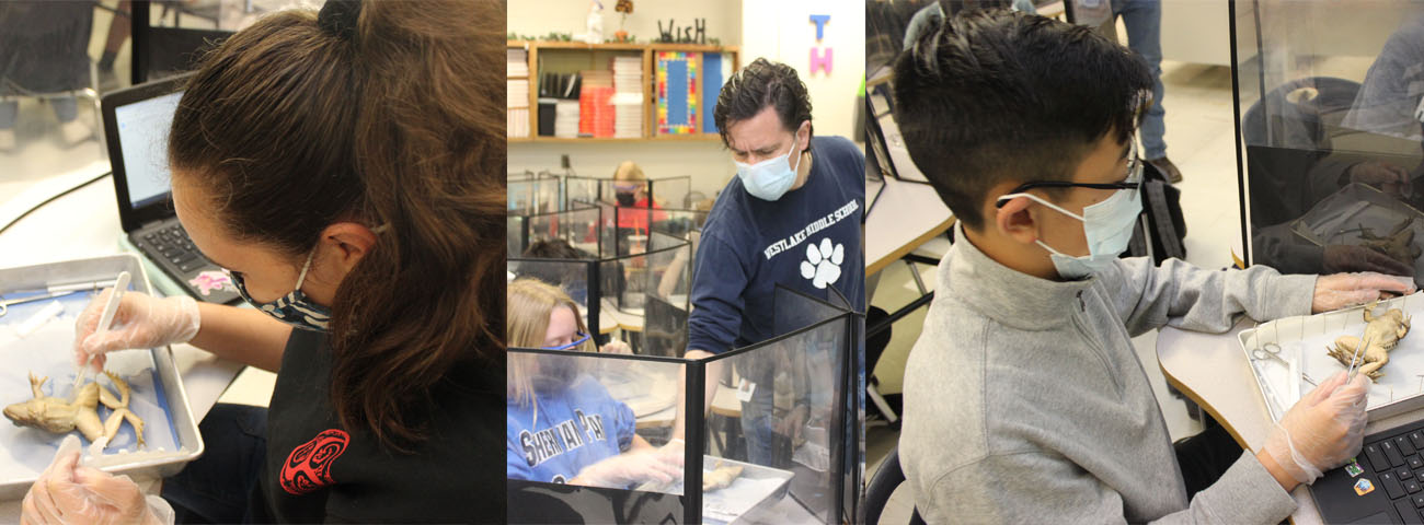 In Mr. Hall's Science Classes, students dissected a frog.