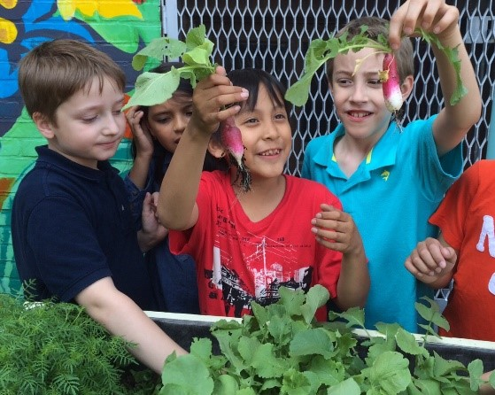 Students at the McGuinness Blvd Garden with vegetables