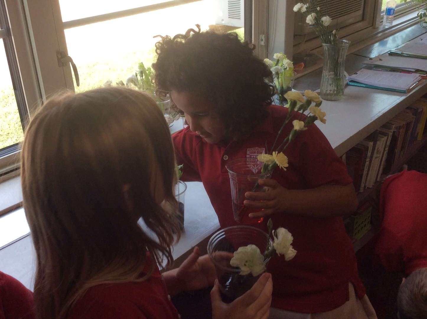 3rd Grade STEM Water Absorption Experiments with Celery & Flowers