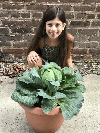 Zoey and her cabbage plant