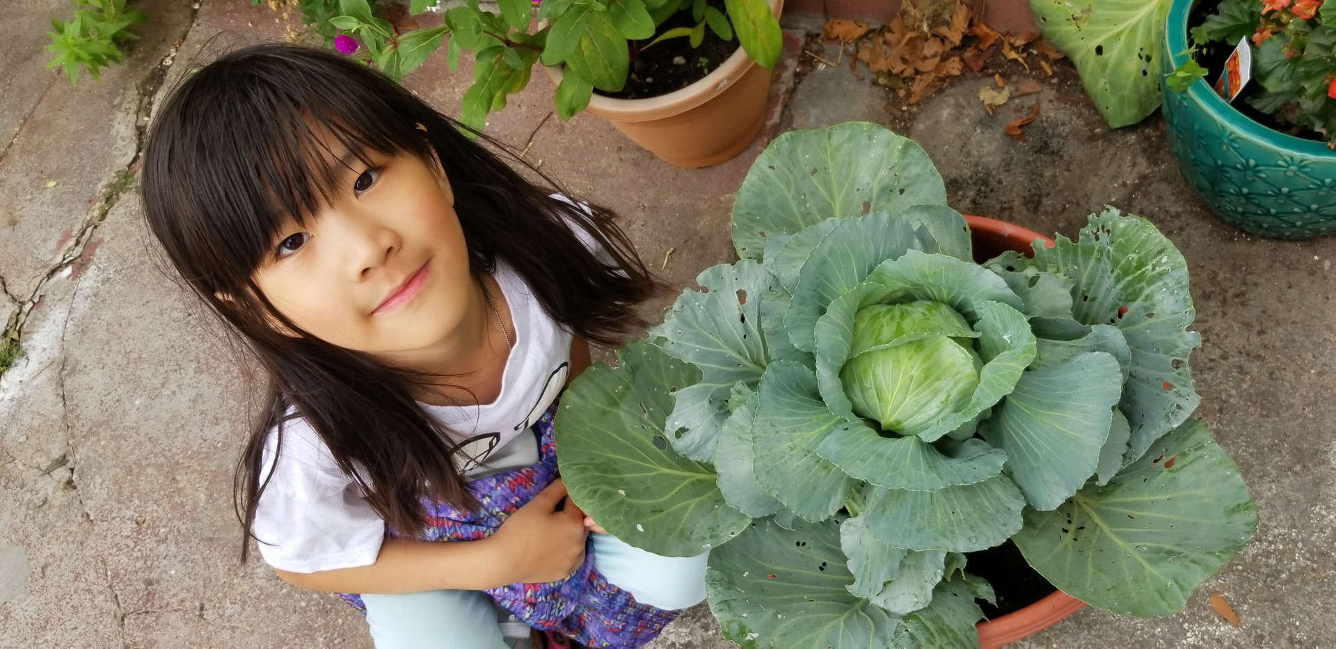 Hei Tung and her cabbage plant