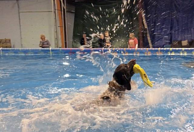 Yough's Bryce Martino won the Junior National Dog-diving contest  Bryce earned the title of 2019 Junior Handler Champion at the 2019 North American Diving Dogs/AKC Eukanuba National Championships held in Orlando Florida this month.  Congratulations Bryce! https://triblive.com/local/westmoreland/yough-student-earns-national-title-at-florida-dog-diving-championship/