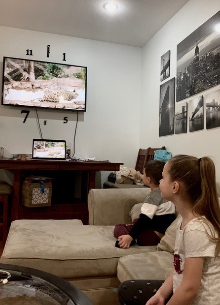 the brother and the sister watch the animals together
