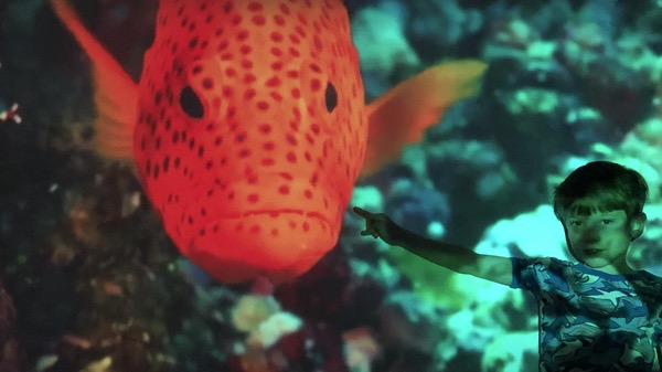 Beautiful orange fish from the Monterey Bay Aquarium