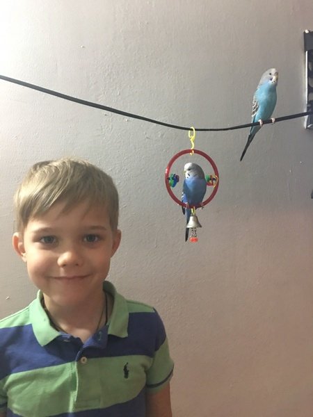 child in front of birds