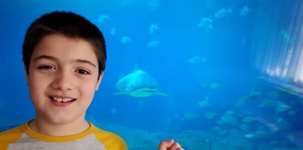fish swims toward boy