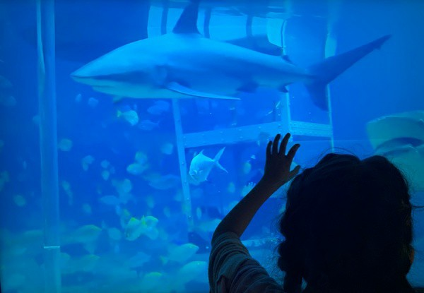 boy pointing to shark