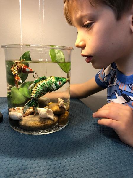 boy looking in glass tank