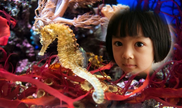 child near seahorse