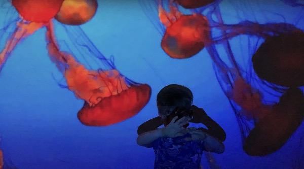 boy near jellyfish in tank