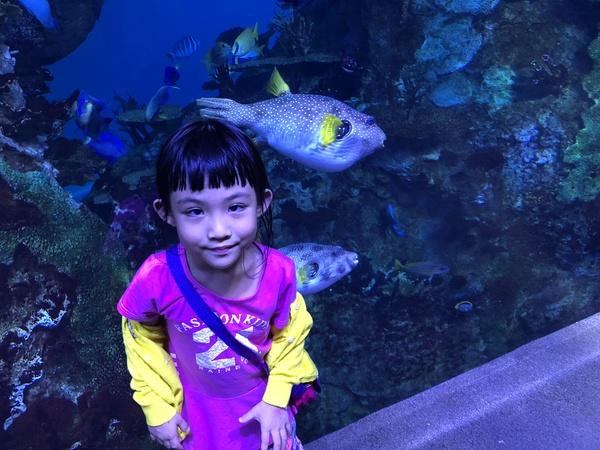 fish swim near the girl