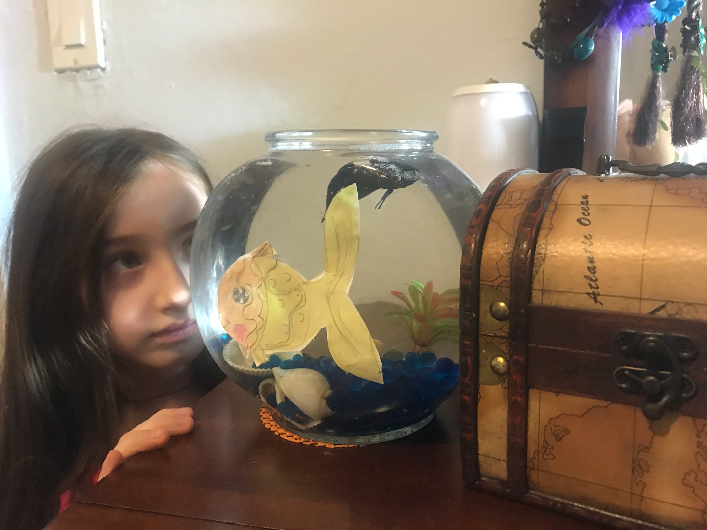 a chid watches the fish in the tank
