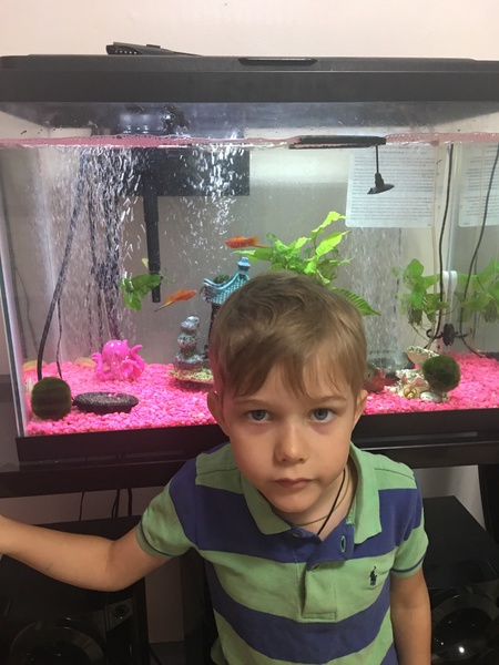 child in front of his fishtanks