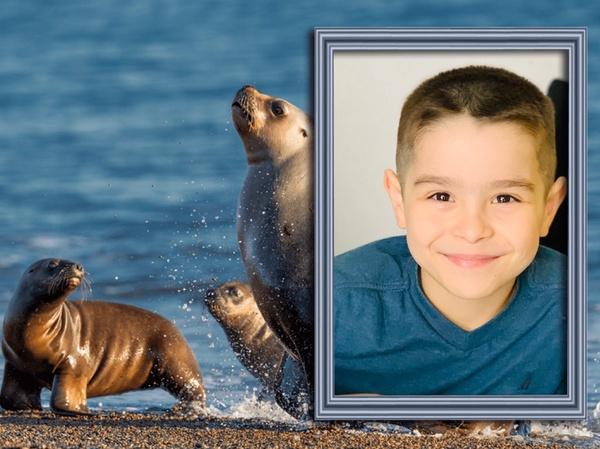 child near sea lions