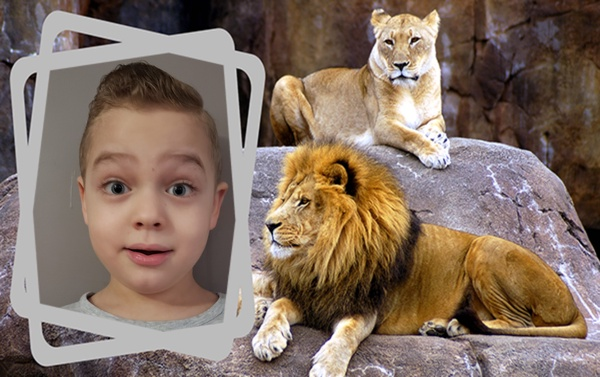 boy next to the lion at the zoo