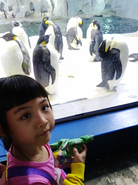 the penguins are near the girl