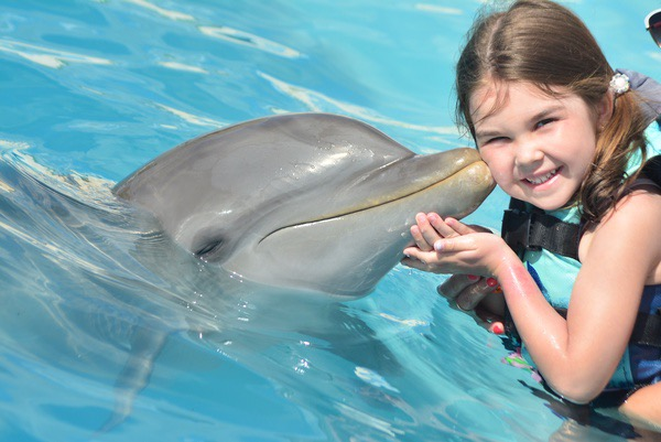 dolphin kisses girl on cheek