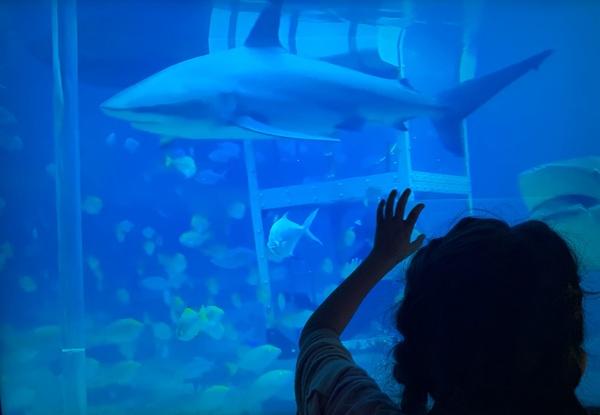 shark swims by the boy