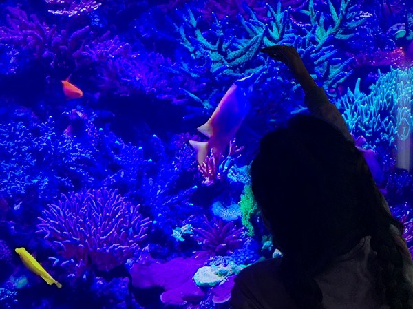 child point at sea animals on the screen