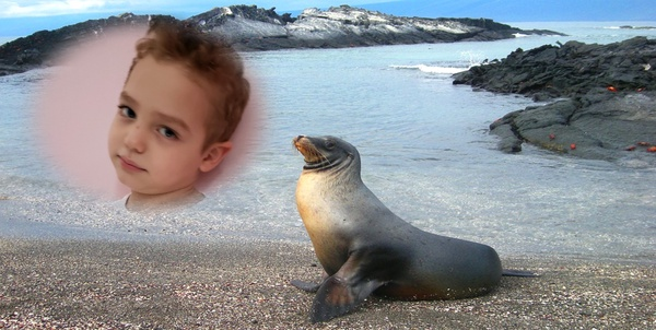 sea lion on beach with picture of child
