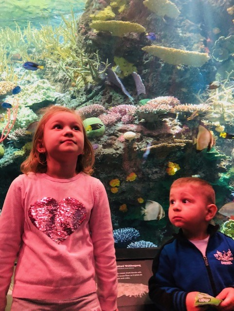 Children are amazed with the views from under the ocean