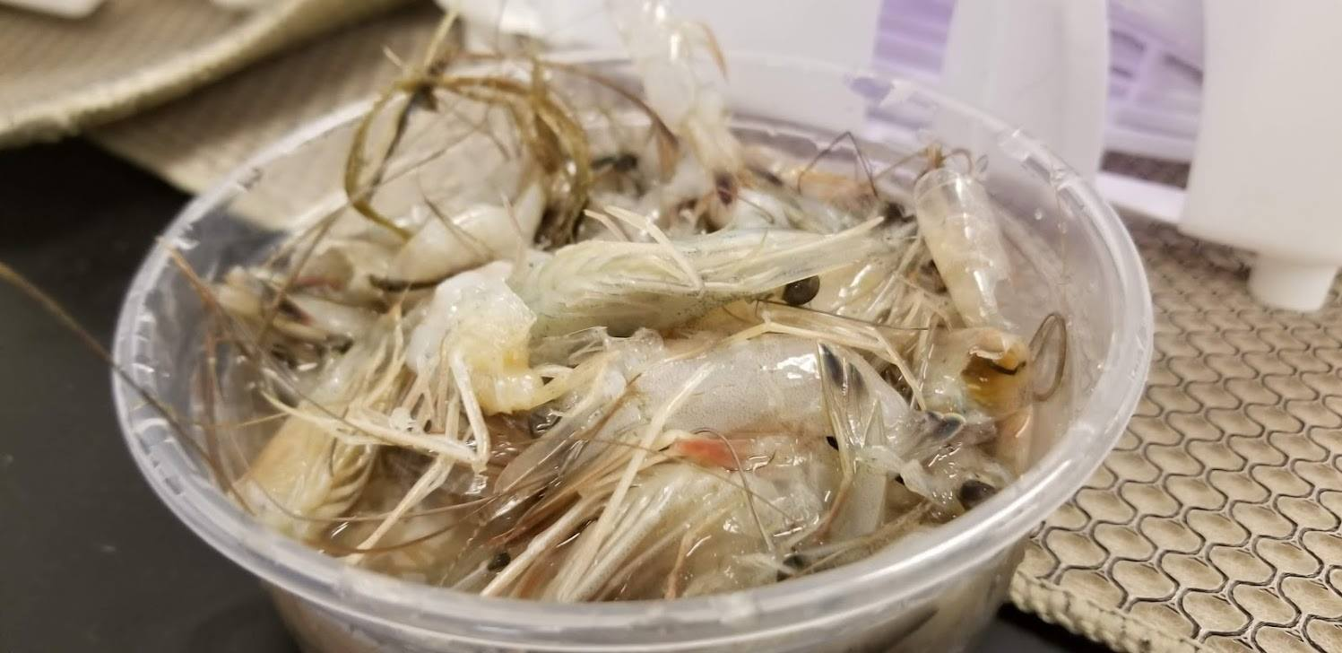 Container of Shrimp