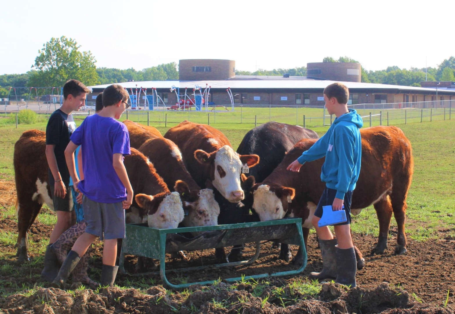 Farm to School students feeding the cows.