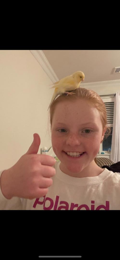 a bird on the head
