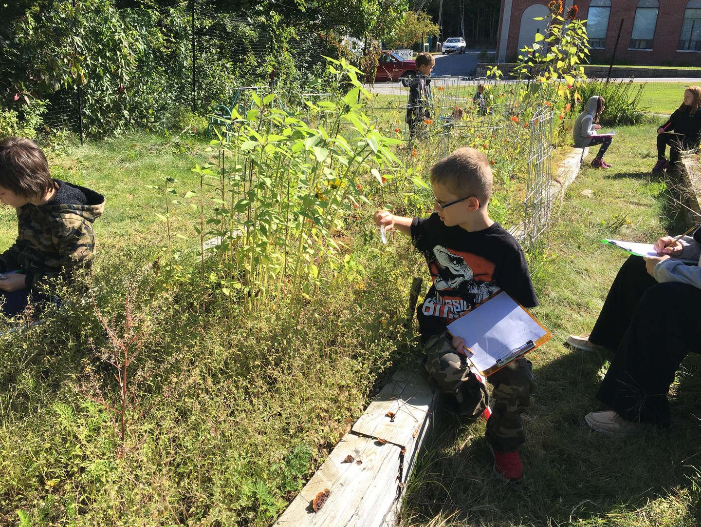Plant observation