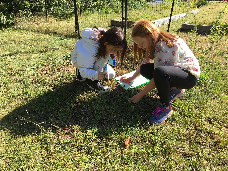 Investigating plants