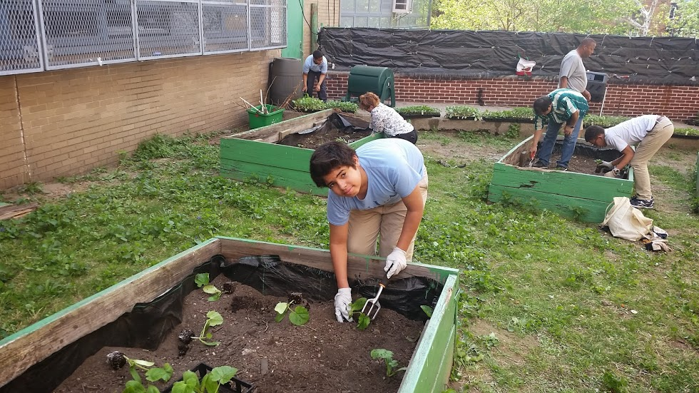 NSLA Vegetable Garden, Student Gardener working the soil