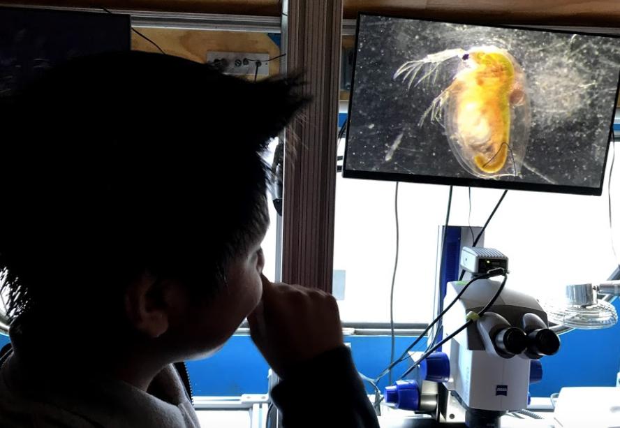 NSLA student examining microscopic organisms