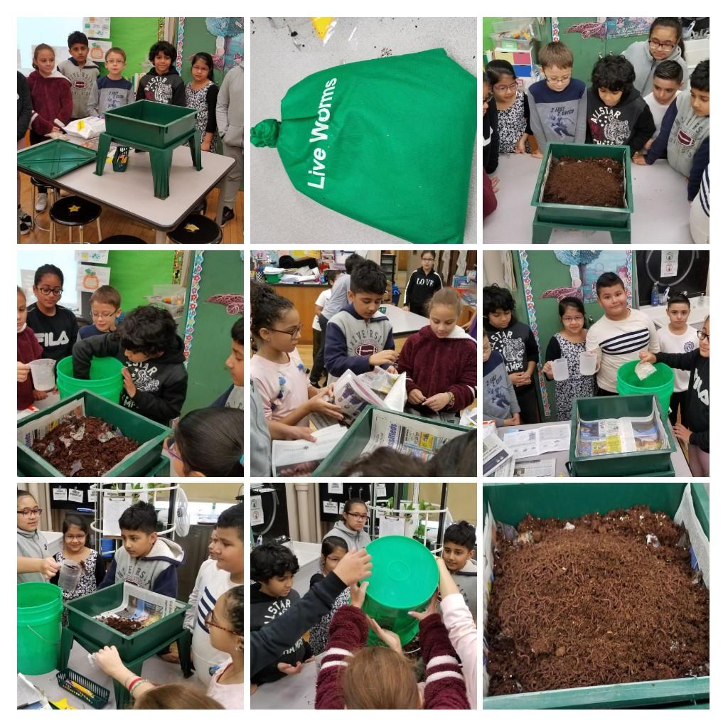 Composting in our Science Lab