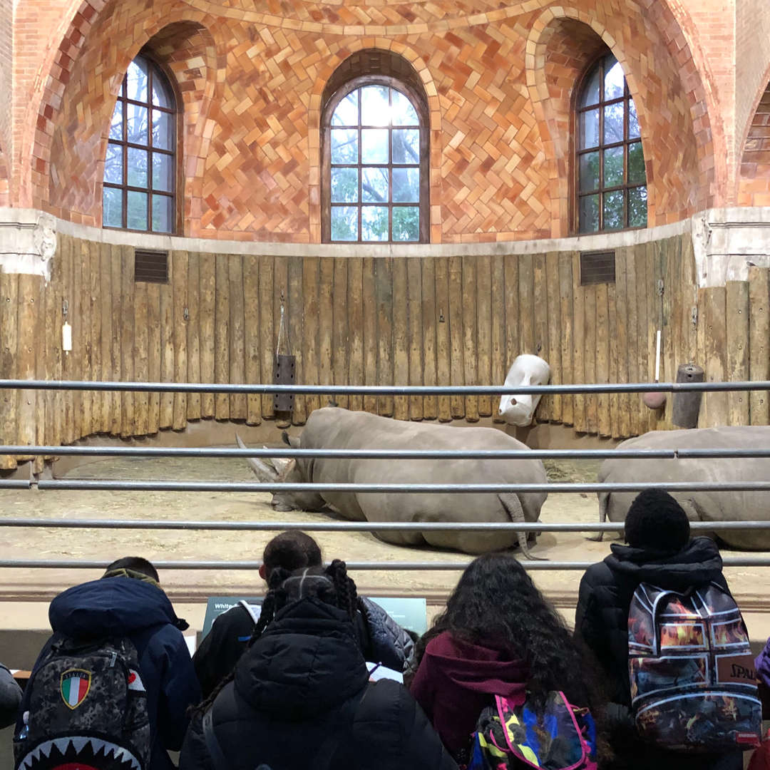 Students at the Bronx Zoo in front of the rhino enclosure.