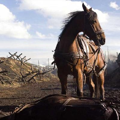 Movie still from War Horse showing a horse in front of No Man's Land.