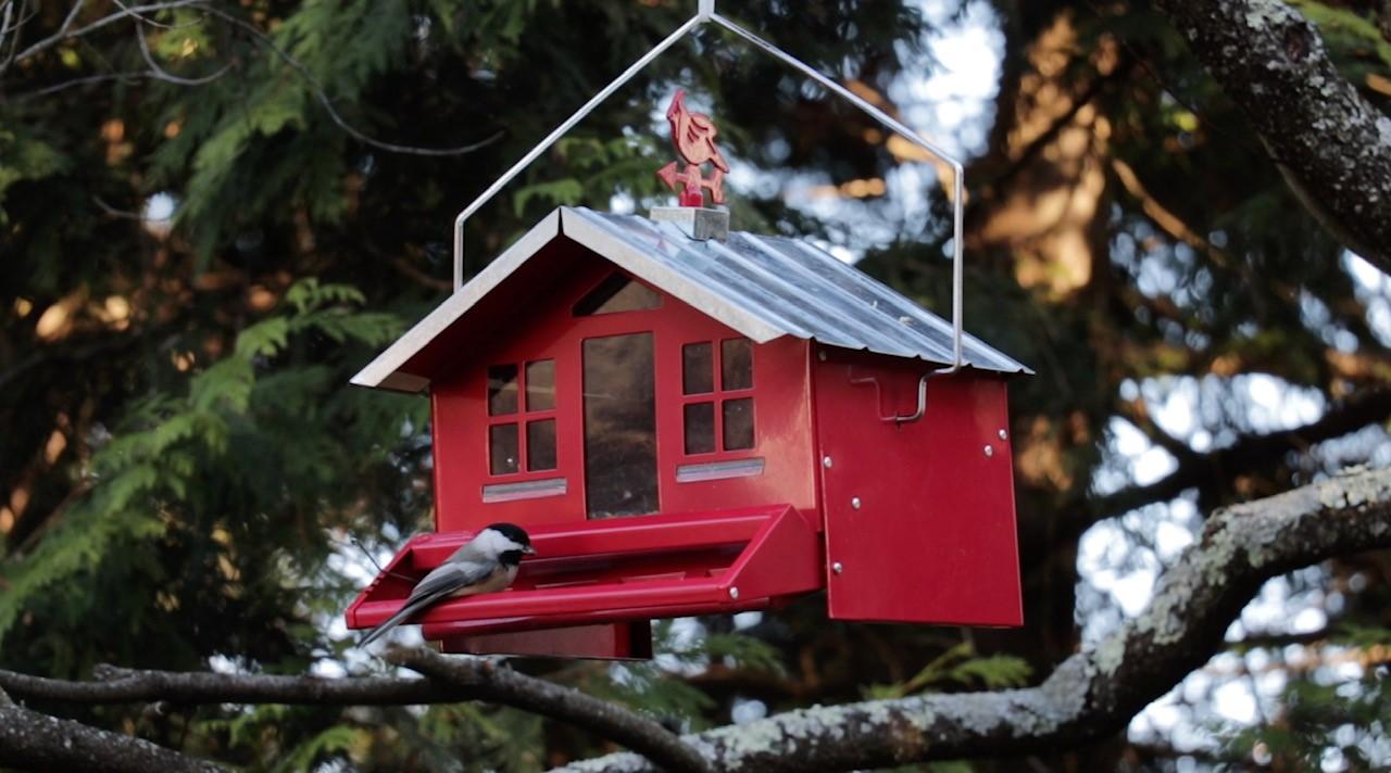 The author's bird feeder!