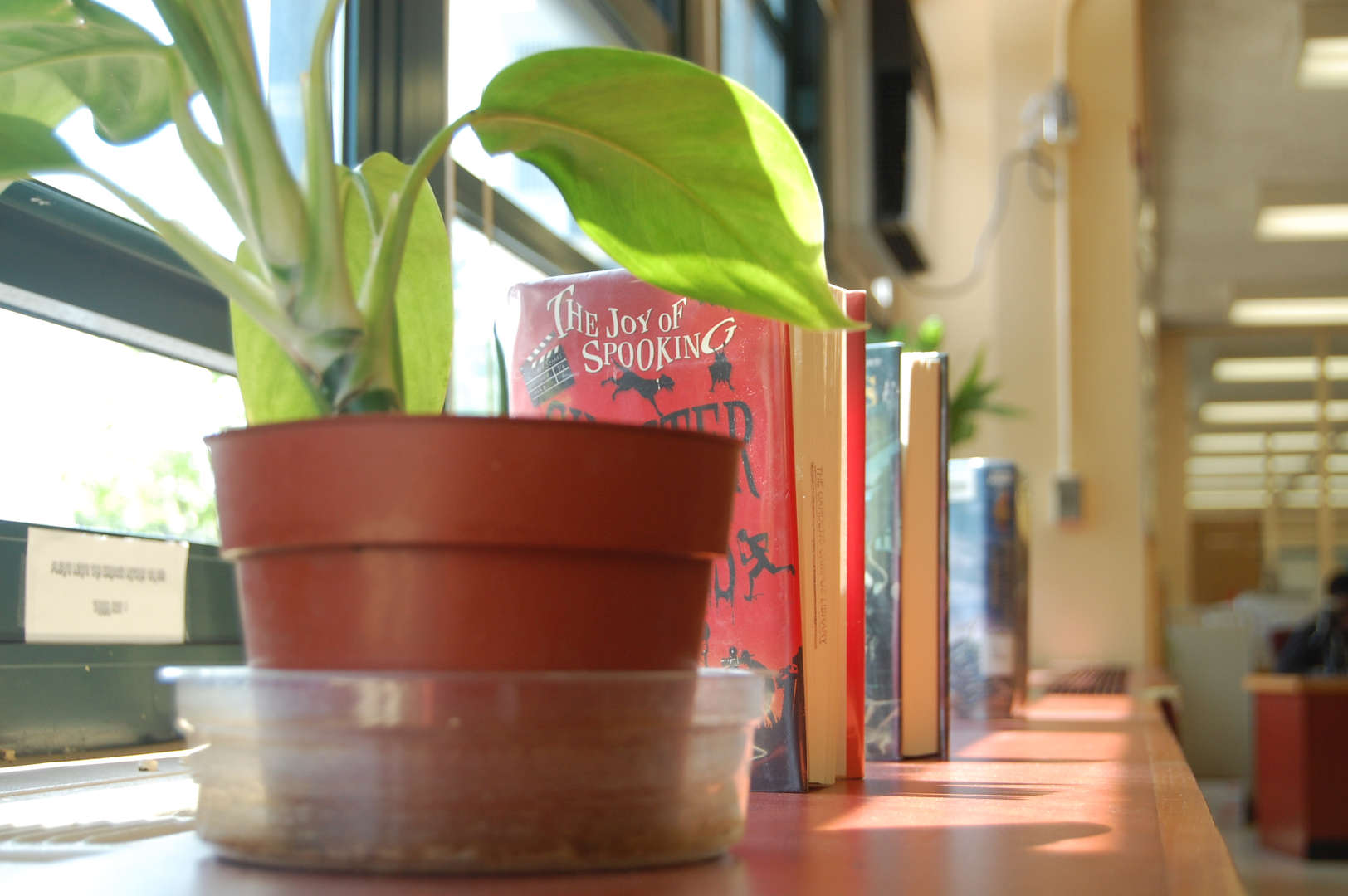window edge in a classroom displaying plant and books
