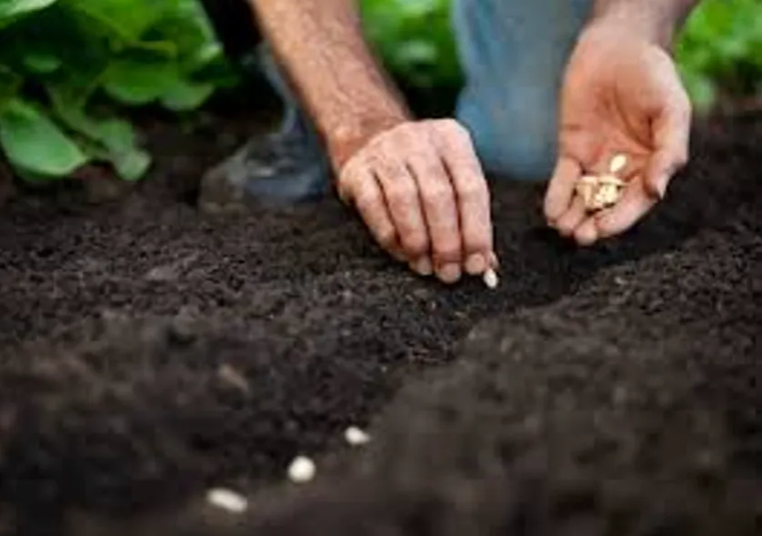 Planting Seeds, picture