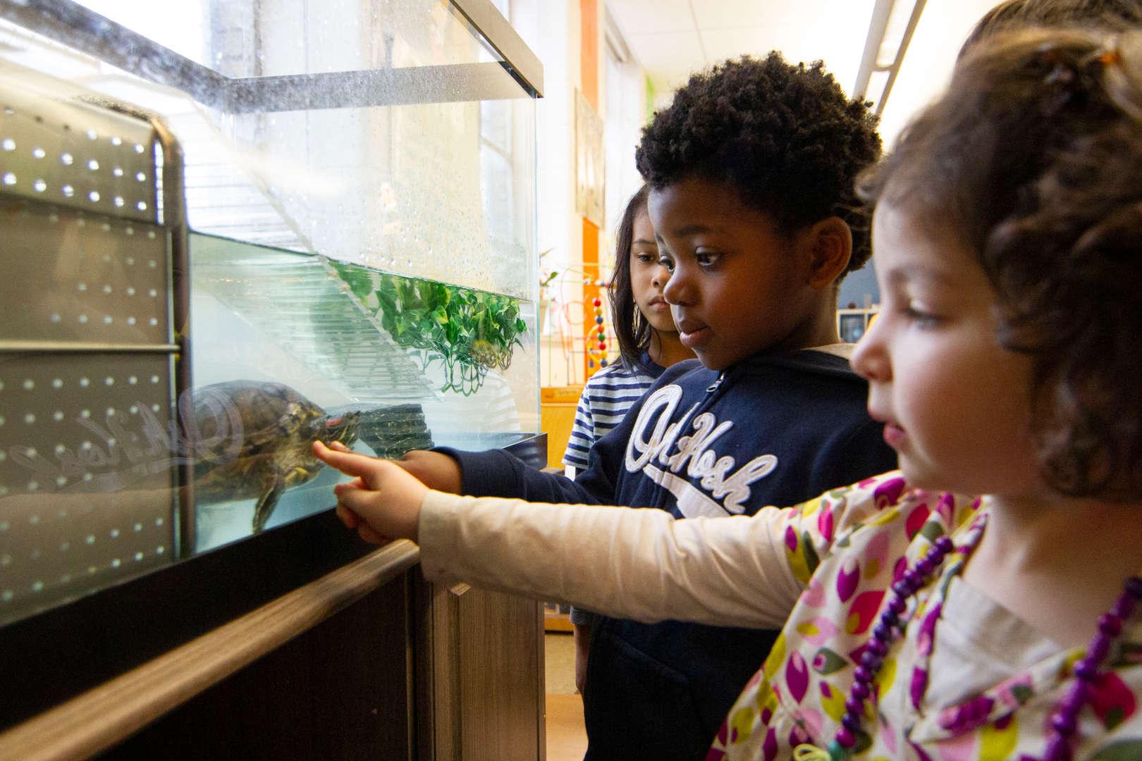Kids looking at Amelia the turtle