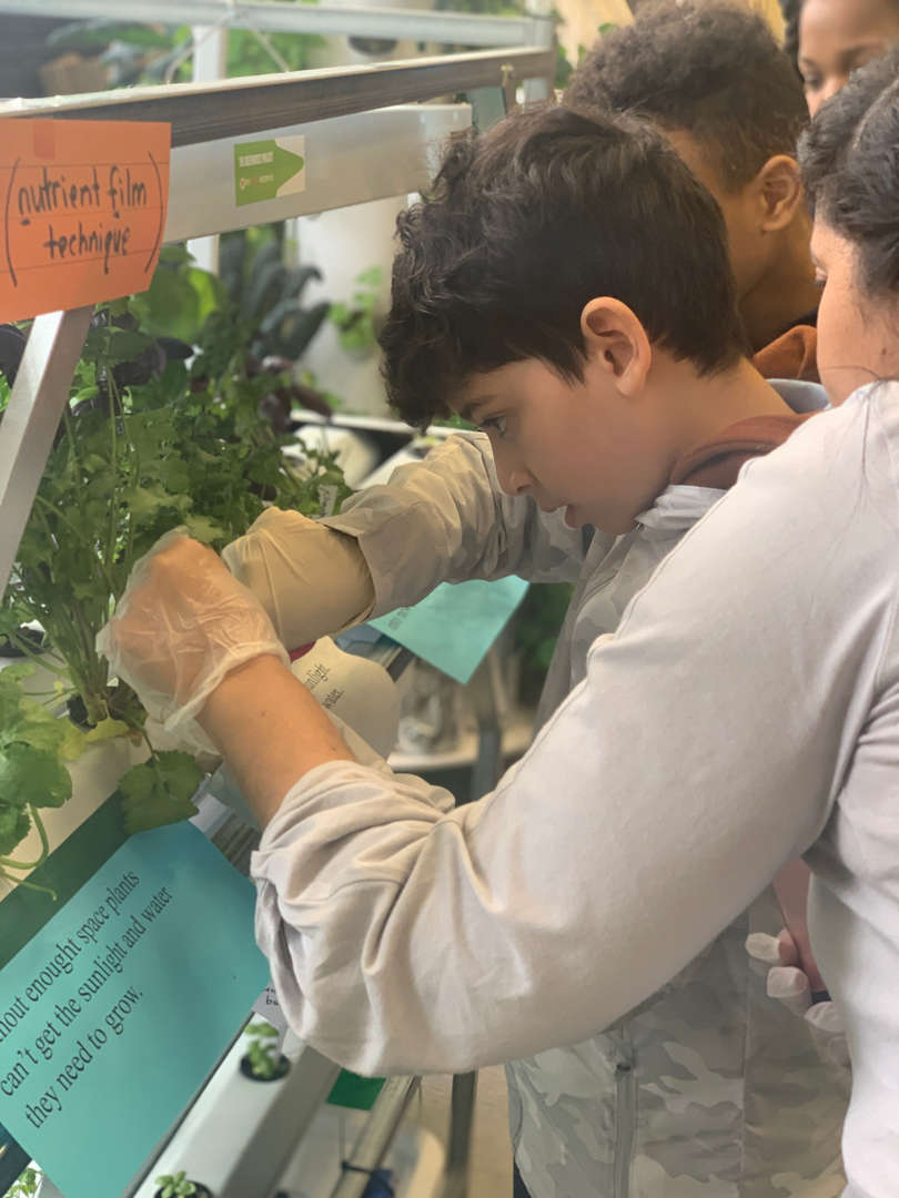Students tending to their plants