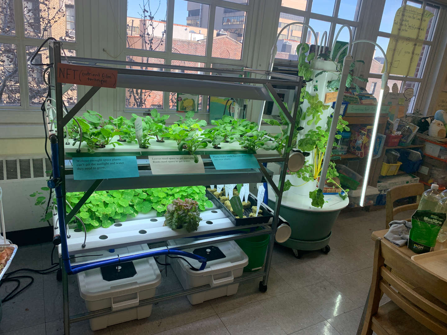 Rows of plants in the Sunworks hydroponics lab