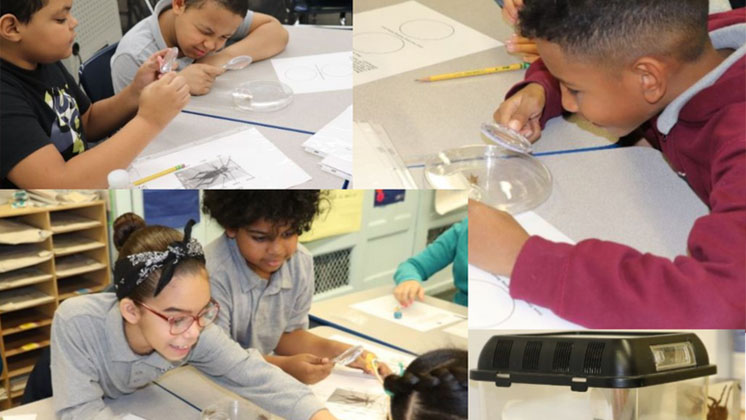 Collage of students examining specimens with magnifying glasses