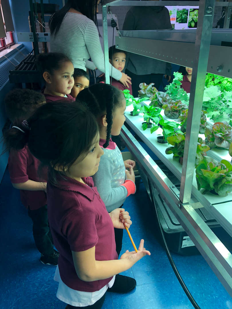 Students in the hydroponics lab