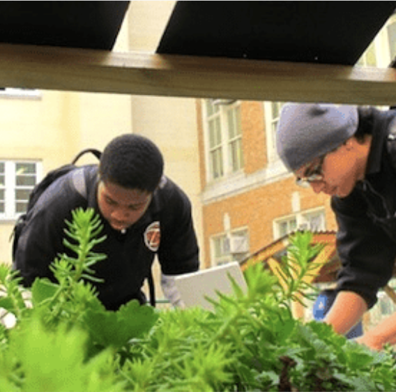 Two students examining greenery outside